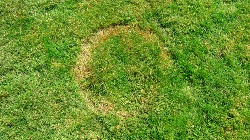 Close up of crop circle in my back yard