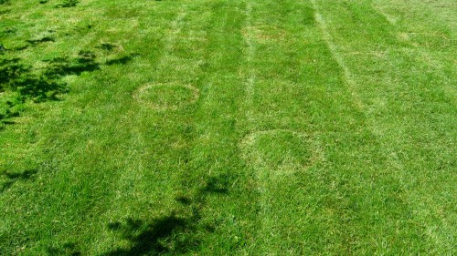 """Crop Circles"" in my backyard."